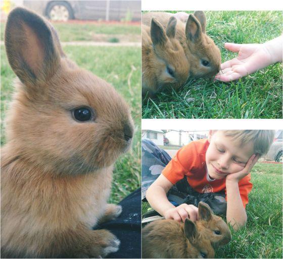 BunniesBlogCollage_1