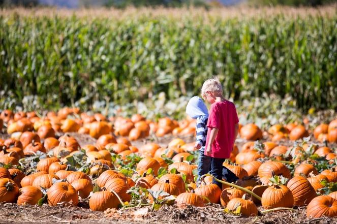 fall2016_pumpkinpatch-5