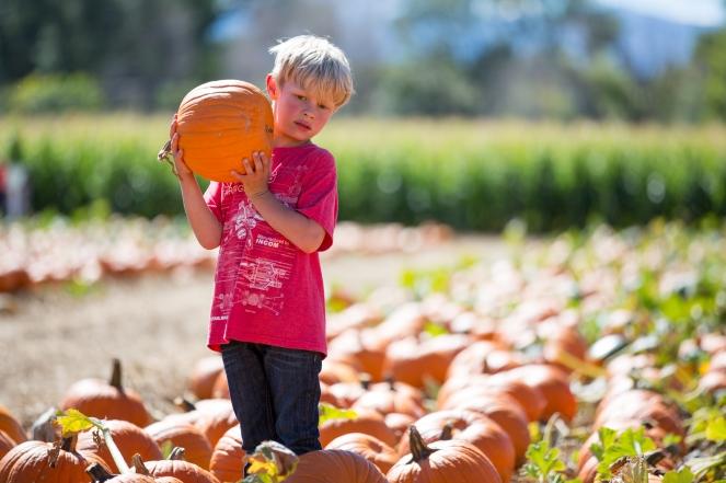 fall2016_pumpkinpatch-8